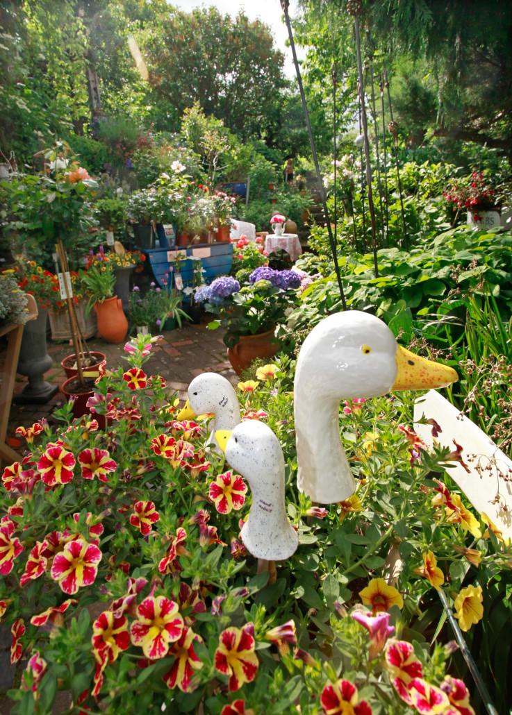 Blumen und Gänseskulpturen - Foto Oliver Schepp