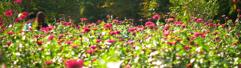 Blumenwiese © Till Schürmann